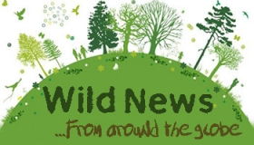 Wild Volunteer News